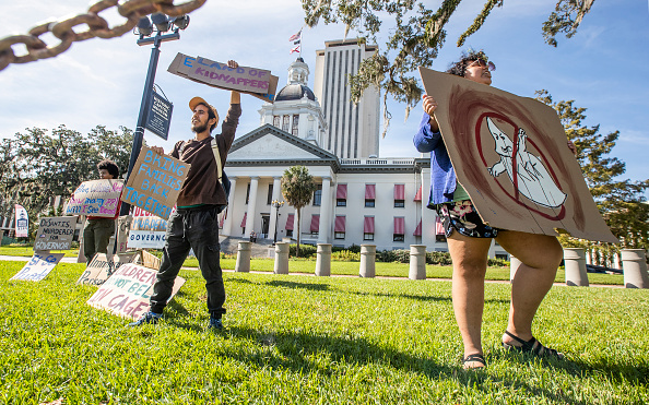 Tallahassee「Contentious Florida Senate And Gubernatorial Midterm Election Results Remain To Be Definitively Settled As Recount Looms」:写真・画像(3)[壁紙.com]