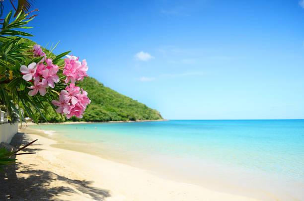 perfect beach:スマホ壁紙(壁紙.com)