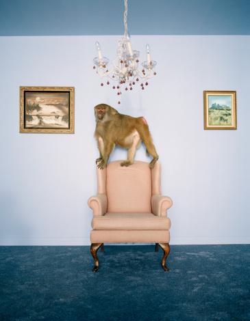 Mischief「Baboon on armchair in living room」:スマホ壁紙(1)