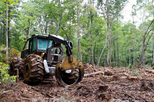 Deforestation「Clearing Trees」:スマホ壁紙(5)