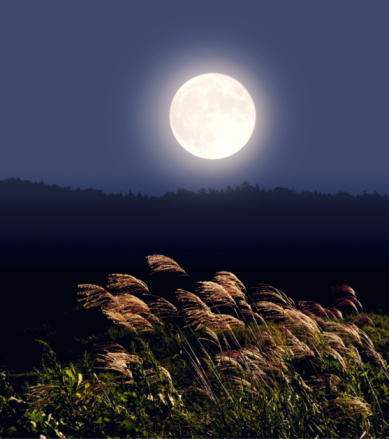 すすき「Full moon and Japanese silver grass, long exposure」:スマホ壁紙(2)