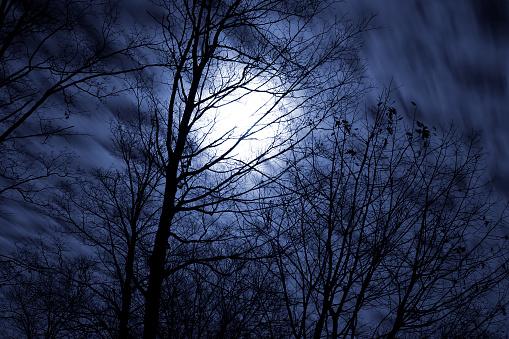 ハロウィン「満月の夜」:スマホ壁紙(3)