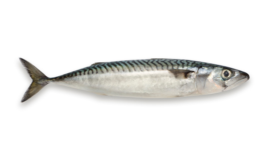Studio - Workplace「Mackerel isolated on white background」:スマホ壁紙(10)