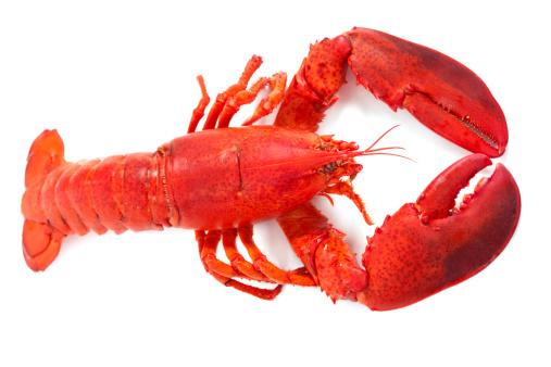 Claw「Whole Maine Lobster」:スマホ壁紙(6)