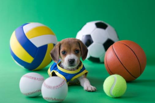 スポーツ用品「Beagle Puppy and Sports」:スマホ壁紙(18)