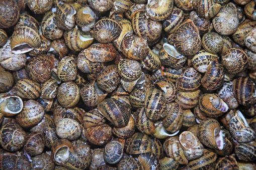 カタツムリ「Snails, Escargots」:スマホ壁紙(18)