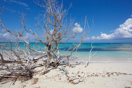 cloud「The deserted pristine shoreline on a remote Caribbean island.」:スマホ壁紙(8)