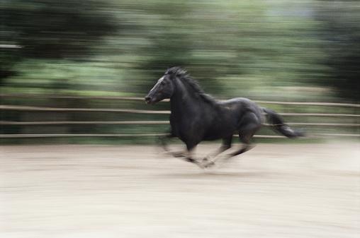 馬「Italy, Latium, Maremma horse galloping (blurred motion)」:スマホ壁紙(16)