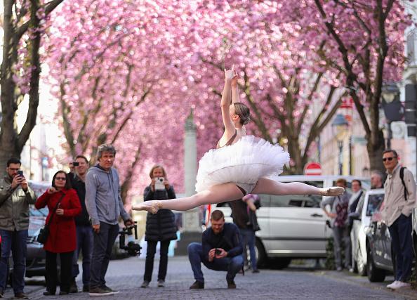 Cherry Blossoms「Vivid Cherry Blossom In Bonn」:写真・画像(17)[壁紙.com]