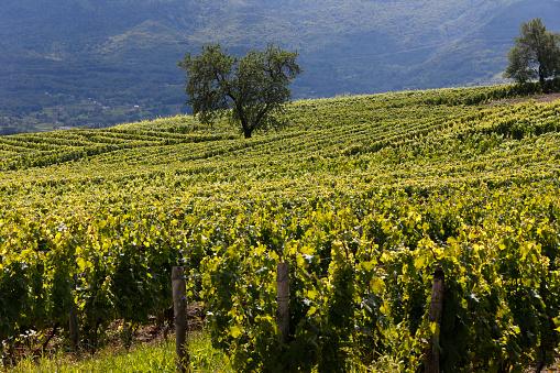 Savoie「Savoie vineyard」:スマホ壁紙(14)