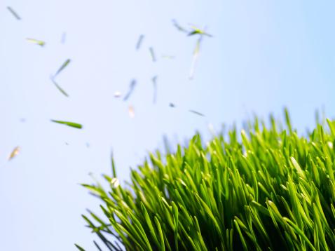 Mowing「Cut grass against sky」:スマホ壁紙(18)