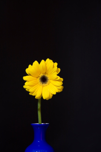 花「Yellow Gerbera flower in a blue vase」:スマホ壁紙(4)