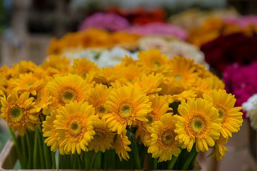 Flower Shop「yellow gerbera daisies」:スマホ壁紙(3)