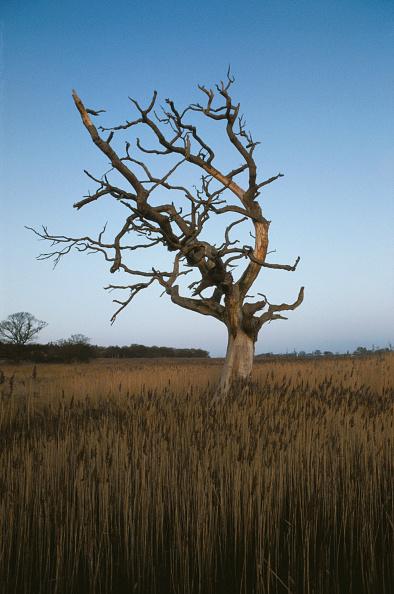 Grass Family「Snape Tree」:写真・画像(18)[壁紙.com]