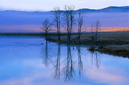 Choosing「Leafless trees reflecting on pond」:スマホ壁紙(19)
