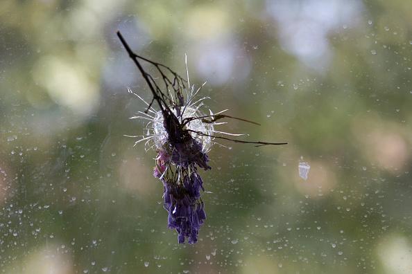 USA「Shooting Rampage In Santa Barbara Leaves Seven Dead」:写真・画像(8)[壁紙.com]