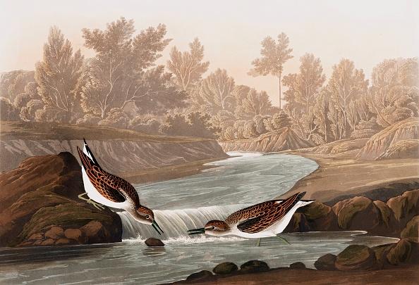 Beak「Little Sandpiper」:写真・画像(19)[壁紙.com]