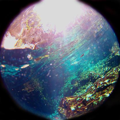 Unrecognizable Person「Swimming in a cenote」:スマホ壁紙(15)