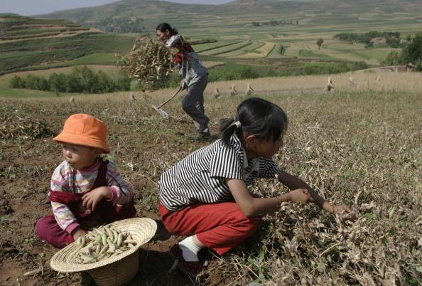 Farm「Children Help Harvest Crops In Northwest China」:写真・画像(17)[壁紙.com]