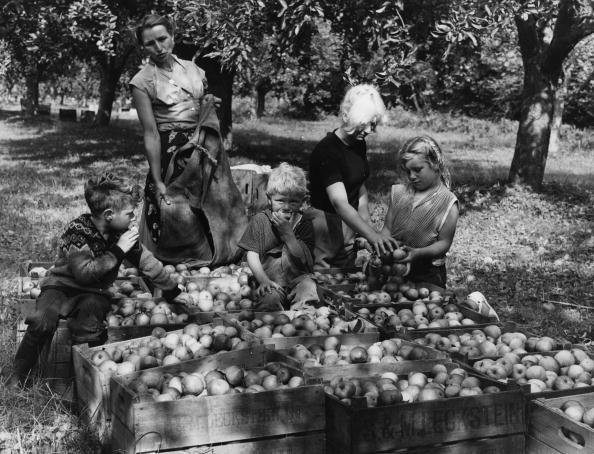 Covent Garden「Apple Harvest」:写真・画像(7)[壁紙.com]