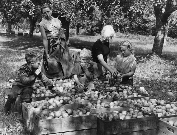Harvesting「Apple Harvest」:写真・画像(13)[壁紙.com]