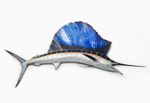 自生「Mounted Sailfish on wall」:スマホ壁紙(0)