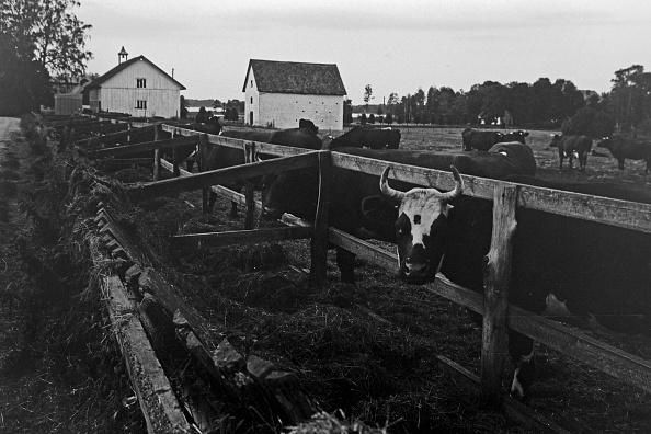 Pasture「Journey Through Sweden」:写真・画像(17)[壁紙.com]