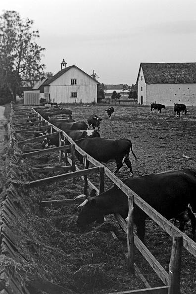 Pasture「Journey Through Sweden」:写真・画像(18)[壁紙.com]
