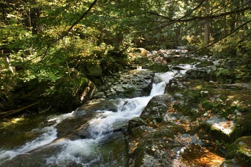 Adirondack Mountains「Stream through forest in the Adirondacks, New York」:スマホ壁紙(8)