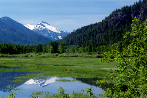 ウェナチー国有林「Meadow, Wenatchee National Forest, Washington, USA」:スマホ壁紙(1)