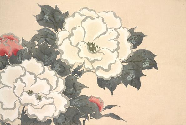 ボタン「Fukami-Gusa」:写真・画像(9)[壁紙.com]
