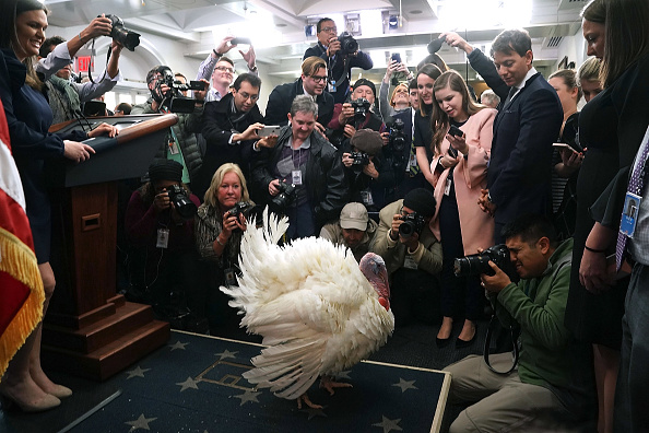 Turkey - Bird「President Trump And First Lady Melania Hold National Thanksgiving Turkey Pardoning Ceremony」:写真・画像(16)[壁紙.com]