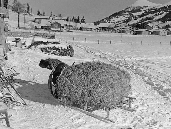 Effort「Winter Cattle Feed」:写真・画像(2)[壁紙.com]
