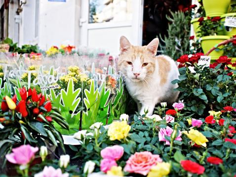 Flower Shop「Cat amongst flowers」:スマホ壁紙(1)