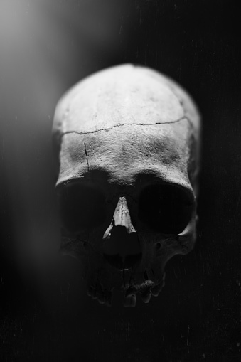 ガラス「Prehistoric Human Skull」:スマホ壁紙(19)