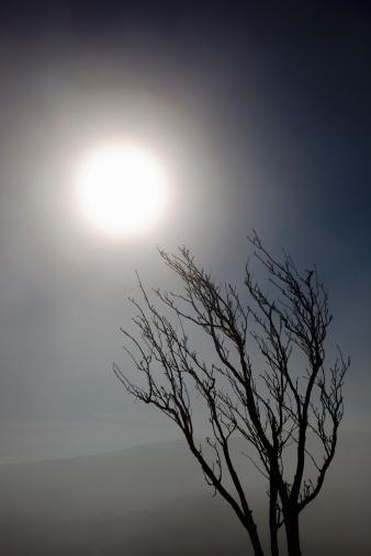 月「Bare winter tree bending to winter sun in mist」:スマホ壁紙(17)