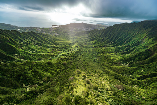 Oahu「Aerial of Tropical rainforest, Hawaii」:スマホ壁紙(18)