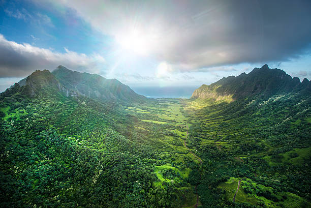 Aerial of Tropical rainforest, Hawaii:スマホ壁紙(壁紙.com)