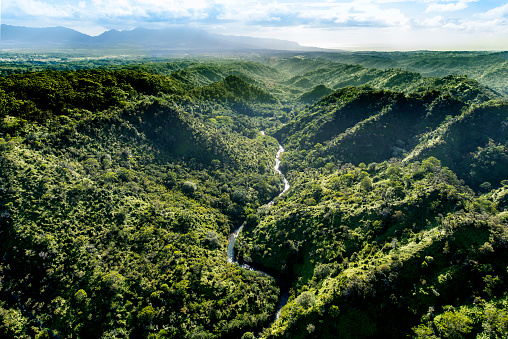 Hawaii Islands「Aerial of Tropical rainforest, Hawaii」:スマホ壁紙(6)