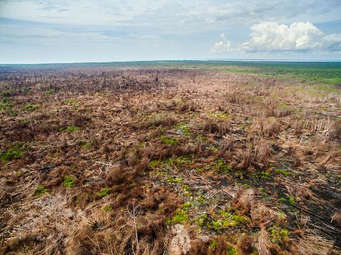 Deforestation「Aerial of the fire damage in Central Kalimantan」:スマホ壁紙(18)