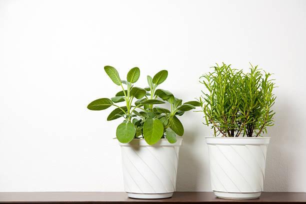 植物にホワイト:スマホ壁紙(壁紙.com)