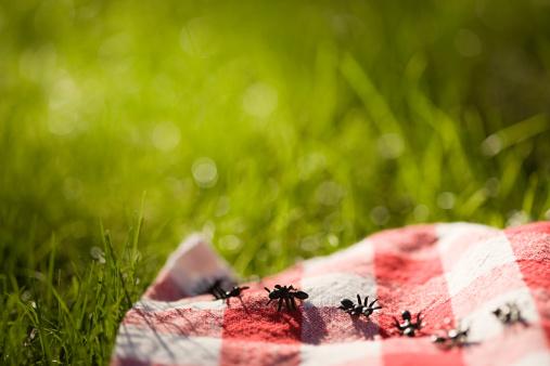 Picnic「Ants on a picnic blanket」:スマホ壁紙(19)