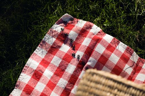 Picnic「Ants on a picnic blanket」:スマホ壁紙(3)