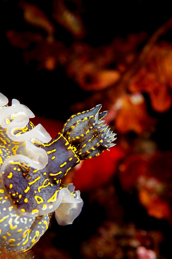 ナメクジ「海の生活ウミウシ水中の美しさ」:スマホ壁紙(17)
