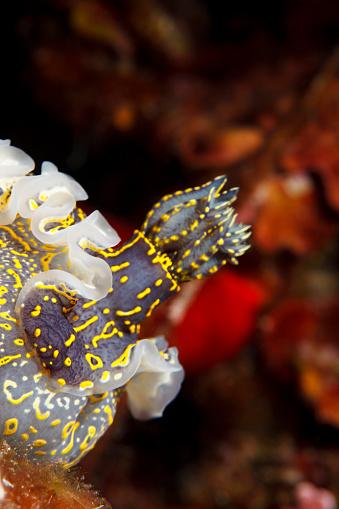 ナメクジ「海の生活ウミウシ水中の美しさ」:スマホ壁紙(19)