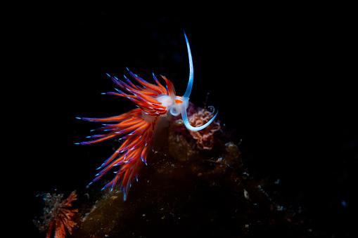 Mediterranean Sea「Sea life Nudibranch Underwater beauty Scuba diver point of view」:スマホ壁紙(6)