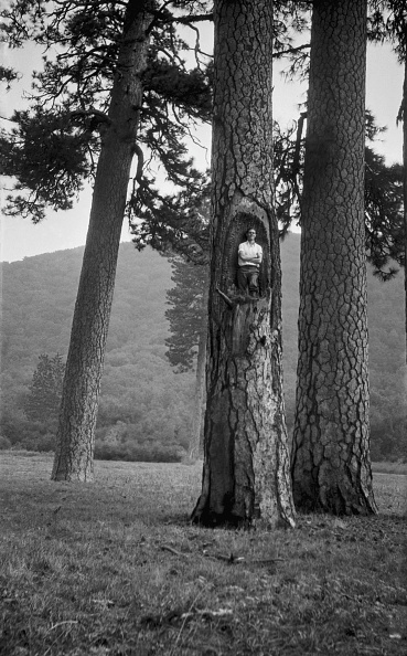 Full Frame「Man In Hollow Of Tree」:写真・画像(0)[壁紙.com]