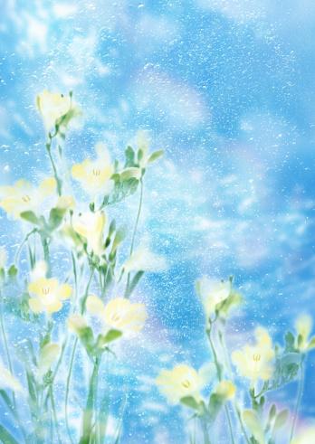 Iris Family「Freesia」:スマホ壁紙(4)