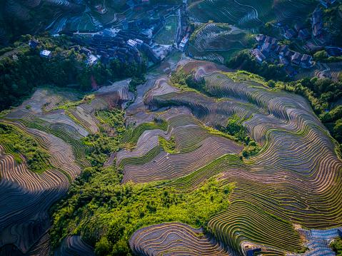 秋「Longji テラスのフィールド Longsheng 、桂林,中国」:スマホ壁紙(15)