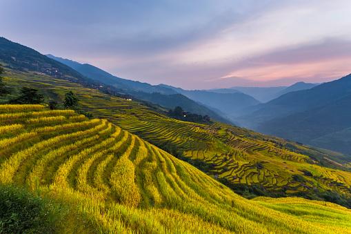 秋「Longji テラスのフィールド Longsheng 、桂林,中国」:スマホ壁紙(18)